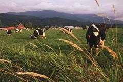 FARMERS LIVESTOCK MARKETING SERVICES